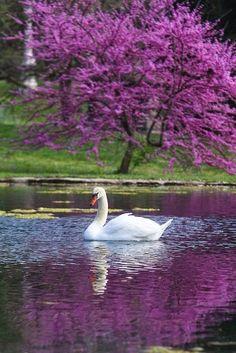 Sweet birds     Grove Swan     Violet bird     Love the jewel tone colors