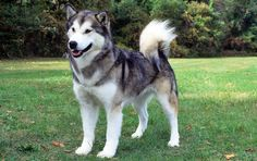 Banned Dog Breeds or even their cross breeds and hybrids which are not to be dealt with or imported by you least you pay 1 million $
