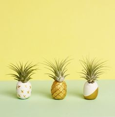 // diy mini pineapple air plant pots