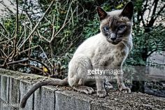"""Close-Up Portrait Of A Cat (from <a href=""""http://andresruffo.photography/picture.php?/1837/recent_pics"""">Photos by © Andres A Ruffo </a>)"""