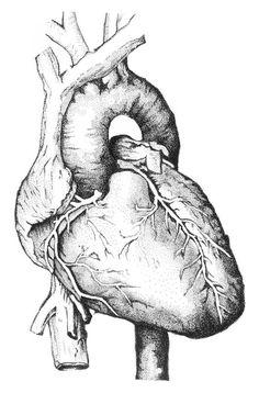 Anatomy Sketches Drawing Organs Drawings Human Body Hearts Art Cartography Graphite Color Pencil