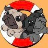 This is the pug rescue network if you are looking for a pug go to their page and find the adoption board also you can look at funny pictures and see the pugs that have already be adopted please try to adopt and help find them a good home Pug Pics, Pug Pictures, Pug Rescue, Cute Pugs, Pug Love, Profile Photo, Bowser, Followers, Adoption