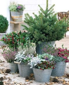 Beautiful Outdoor Winter Container Gardening Design Ideas - House and home