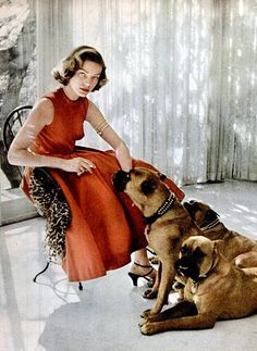 Lauren Bacall sits with her pet Boxers: Harvey, George and Baby- Beverly Hills, April 1953