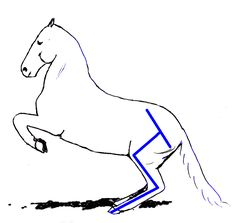 This page gives you a closer look at how the horse's head and neck influence the horse's balance. Dressage Videos, Dressage Horses, Info Graphics, Head And Neck, Animals Beautiful, Animals And Pets, Equestrian, Closer, Exercises