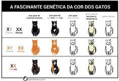 A fascinante genética da cor dos gatos