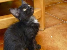 PROTECTORA D'ANIMALS LYDIA ARGILÉS: DESDE FLIX, SOLO QUEDAN 4 PARA ADOPTAR, SON PRECIO...