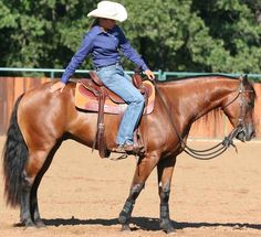 Horses learn through both positive and negative reinforcement. Discover how to use both types of rewards together when your horse really comes through for you—and speed the rate of his learning.
