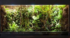 Dart frog vivarium/paludarium with some build information