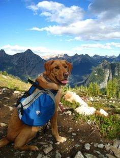 Adventures with Fido: How to Camp with Your Dog. This article and the comments below make some good points.