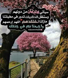 Arabic Words, Ramadan, Mountains, Nature, Travel, Beautiful Things, Quotes, Art, Quotations