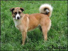 CHIQUI (Diciembre 2012) Es cariñosa y muy buena. Le encanta salir de paseo. Sociable con otros perros.
