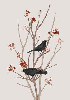 BLACKBIRD ON ROWAN TWIG 2 Blackbird, Rowan, Kos, Artworks, Posters, Animals, Animales, Animaux, Poster