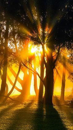 Morning fog sunrays