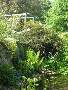 Garden pond and pergola - East Lothian garden - designed by Goose Green Design