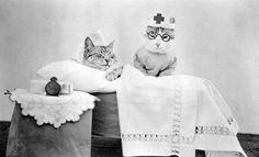 Vintage nurse cats? Three for three!