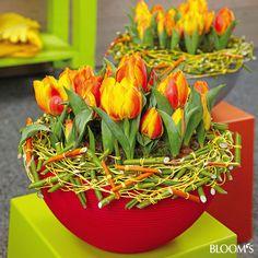Frühlingsblumen in Kübel und Schale: Schale mit Tulpen und Hartriegel-Kranz