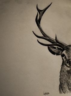 Geyik Kursun kalem 2B - 6B Moose Art, Sketches, Animals, Drawings, Animales, Animaux, Animal, Doodles, Animais