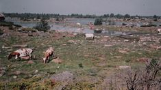 """""""Kivet ovat tähän kasvaneet"""" – näin maa kohoaa ja elämä muuttuu   Yle Uutiset   yle.fi Maa, Finland, Westerns, Dolores Park, Mountains, Nature, Travel, Naturaleza, Viajes"""