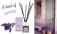 "A delicate, natural scent captured in an elegant diffuser. Its color is so soft and gentle.. and reminds you of a springtime about to come..   http://www.drtaffi.it/lines/acqua-di-bolgheri/ethereal-lavender.html  Il delicato colore e l'odore caratteristico della #lavanda racchiusi in un elegante diffusore per creare nei tuoi ambienti una vera primavera dei sensi. Firmato ""Acqua di Bolgheri"""