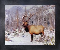 Rocky Mountain Bull Elk Big Antler Animal Wildlife Framed... https://www.amazon.com/dp/B00GX7O1AO/ref=cm_sw_r_pi_dp_x_qLEaybSGB5MAQ