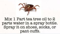 Essential Oil Uses, Young Living Essential Oils, Essential Oil Diffuser, Homemade Tick Repellent, Bug Spray Recipe, Flea Remedies, Diy Pest Control, House Cleaning Tips, Useful Life Hacks