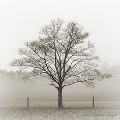black and white photography trees tree nature by NicholasBellPhoto, $80.00