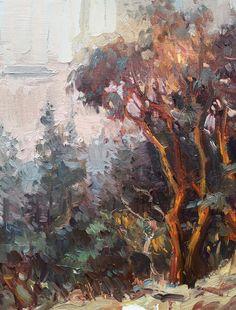 Jose De Juan Arbutus tree in Cypress