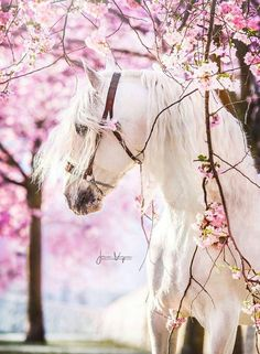 Cute Horse Pictures, Beautiful Horse Pictures, Beautiful Horses, Cute Horses, Hello Spring, Animals, Twitter, Horse, Animales