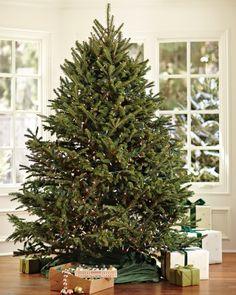 Fresh Blue Ridge Mountain Christmas Tree #williamssonoma