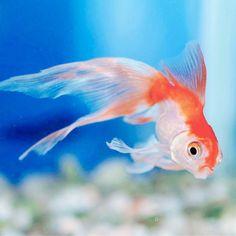"""""""Ognuno è un genio. Ma se si giudica un pesce dalla sua abilità di volare passerà tutta la vita a credersi stupido."""" #Einstein #quote #creativity #JF #JFproject #inspiration 🐠"""