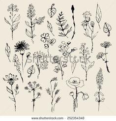 Floral set  hand drawn. vector