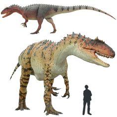 Allosaurus Dinosaurio carnívoro del Jurásico gigantesco. Poseía fuertes garras, su cabeza podía llegar a medir 90 cm. de largo. Poseía enormes dientes curvos, aserrados por ambas caras. Se dice que (como en casi todos los carnosaurios) era un dinosaurio torpe y pesado. El craneo poseía una arista osea por encima de los ojos que lo hacía inconfundible entre sus parientes carnívoros.  Longitud: 12 metros. Encontrado en Norteamérica, África y Australia.