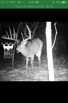WOW! Wish I could get this one on my trail cam! Better yet, wish I could get him through my scope!! Oh hell ya!
