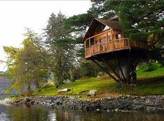 Tree House 101