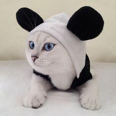 coby the cat - Google'da Ara