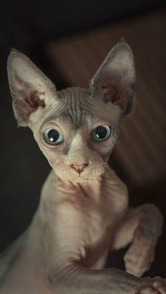 Gorgeous cat. :)
