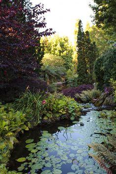 Ayrlies Garden ferns New Zealand, water lillies     Gardenista