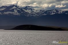 Crossing the Drake Passage to Antarctica: Sometimes Life Throws Us Surprises