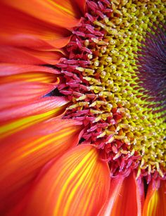 gerbera. Orange combined with yellows, fuchsia and soft pink.
