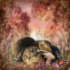 Bunny Dreams - Carol Cavalaris