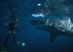 Why spearfishing will always be more intense than traditional hunting. Under the water you are sometimes the hunted.