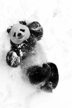 This is a panda attempting to make a snow angel! Go PANDA! Beautiful Creatures, Cute Creatures, Animals Beautiful, Animals And Pets, Baby Animals, Funny Animals, Cute Animals, Wild Animals, Funny Dogs