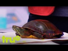 The Carbonaro Effect - Craft Turtle - YouTube