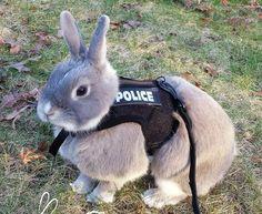 """""""Nine-bun-bun, what's your emergency?"""""""