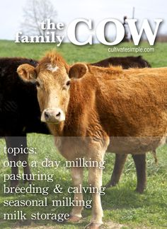 Cultivate Simple 18: The Family Cow