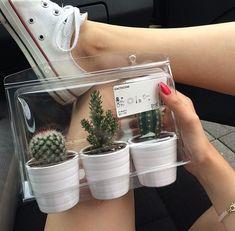Ikea cacti by Janai | WHI