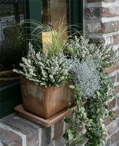 Nora Gethke Nora Gethke Nora Gethke Pineagle The post Nora Gethke appeared first on Balkon ideen. The post Nora Gethke appeared first on Gartengestaltung ideen. Balcony Flowers, Balcony Plants, Balcony Garden, Garden Planters, Fairy Doors On Trees, Container Flowers, Autumn Garden, Flower Boxes, Container Gardening