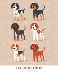 Different breeds of Coonhounds: Blue Tick, Black and Tan, Plott Hound, Red Tick, Treeing Walker, Redbone. The Black and Tan Coonhound originally