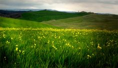 The Val D'Orcia – Italy